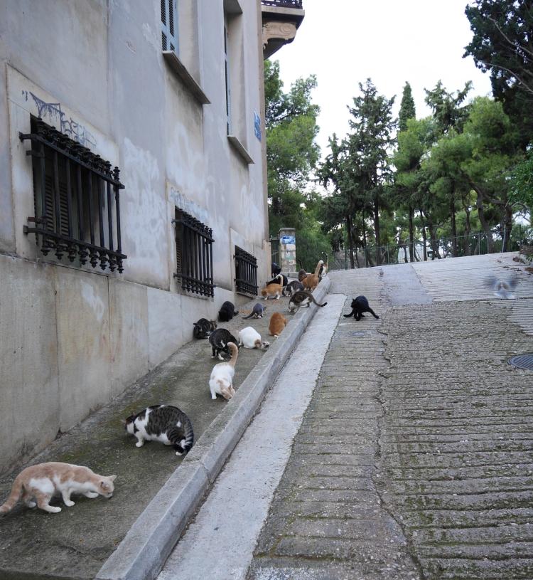 Beaucoup de chats à Athènes