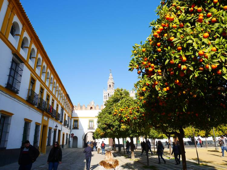 Patio de Banderas à Seville
