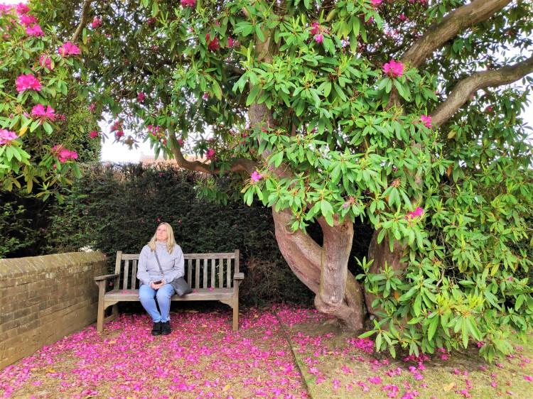 Les jardins de Penshurst Place