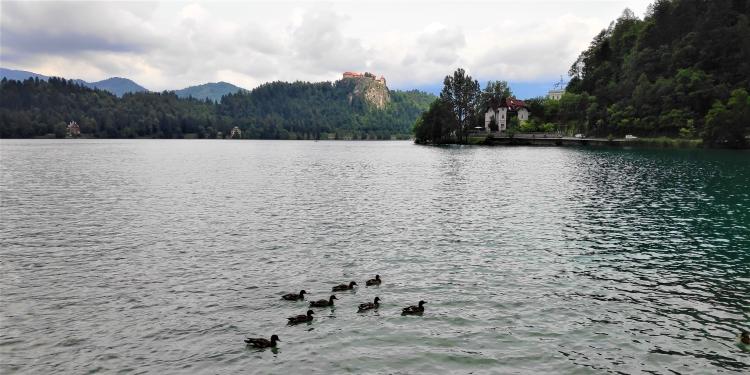 Le lac de Bled et son château
