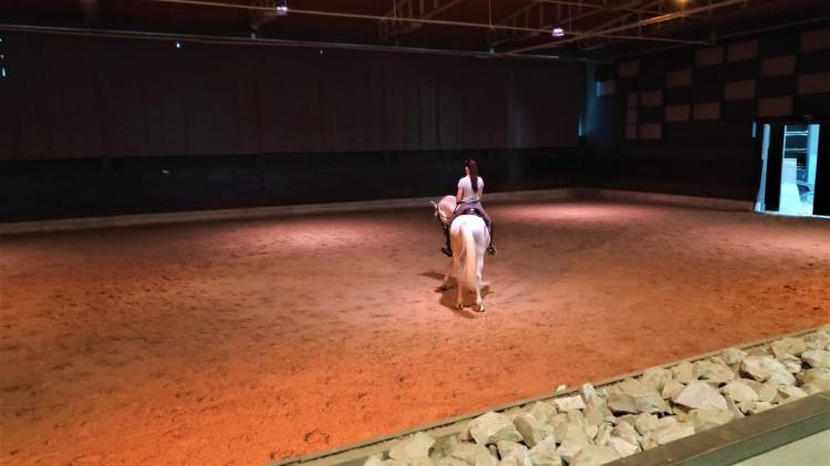 Entrainement cheval lipizzan à Lipica
