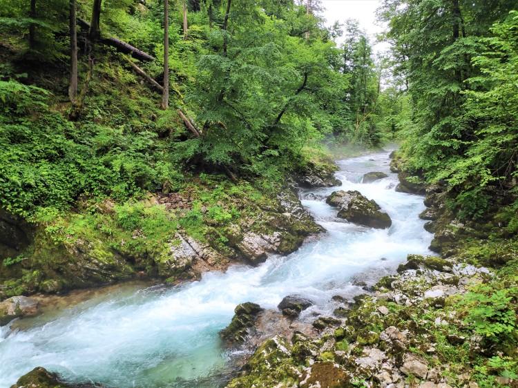 Gorge de Vintgar, Slovénie