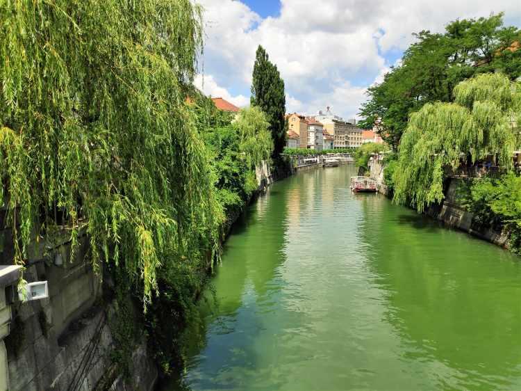 Les rivages enchanteurs de la Ljubljanica à Ljubljana. Slovénie.