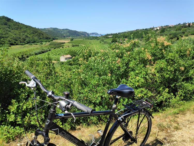 À vélo sur le sentier Parenzana en Slovénie