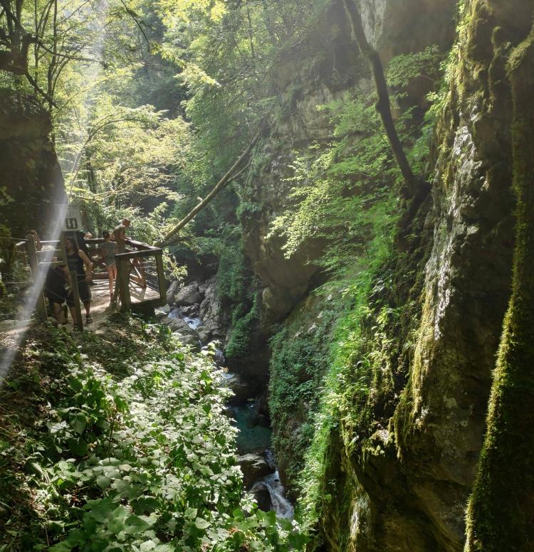 La végétation luxuriante des Gorges de Tolmin
